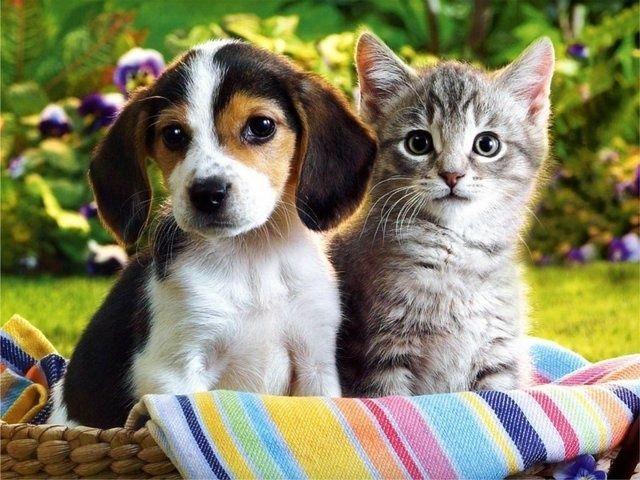 cuki macska kutya