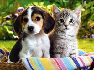 cat_and_dog07